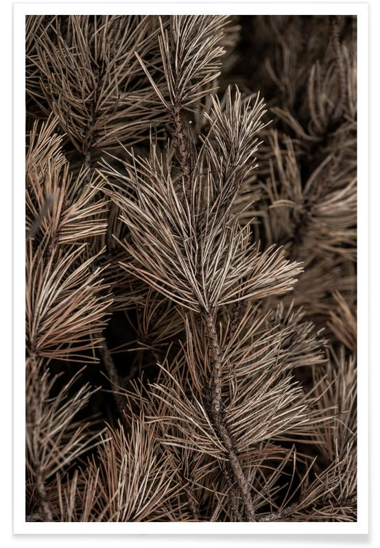 , Dried Branches affiche