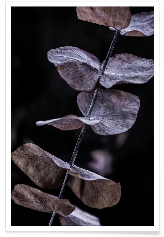 , Eucalyptus 11 Poster