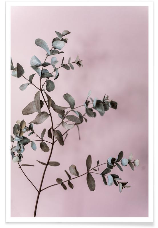 , Eucalyptus 12 affiche