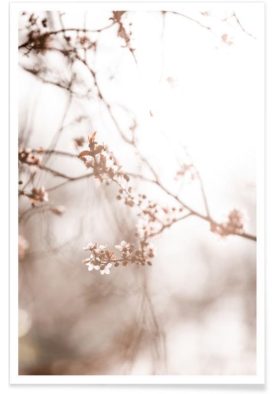 , Last Spring 3 affiche