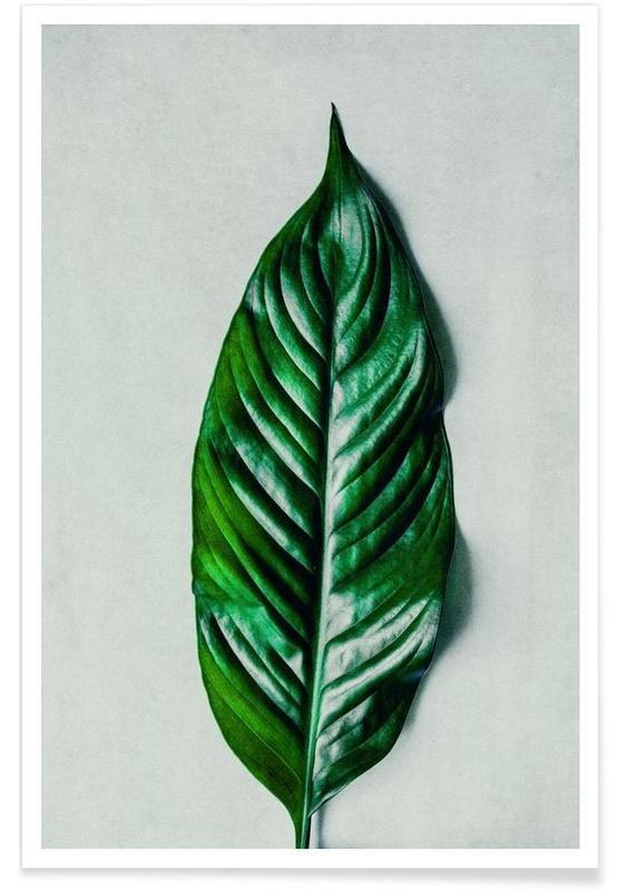 Bladeren en planten, Green Leaf 1 poster