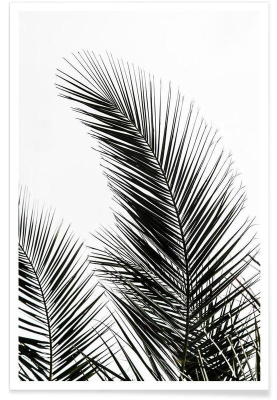 Palmen, Palm Leaves 1 -Poster