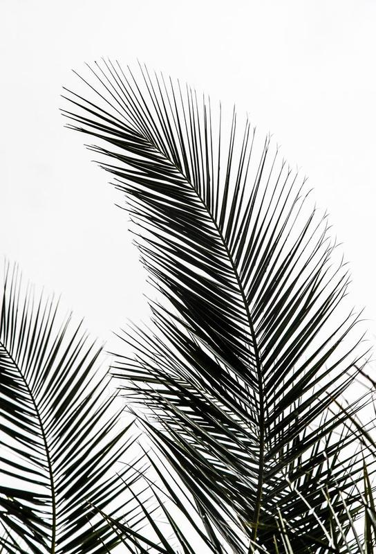 Palm Leaves 1 Aluminium Print