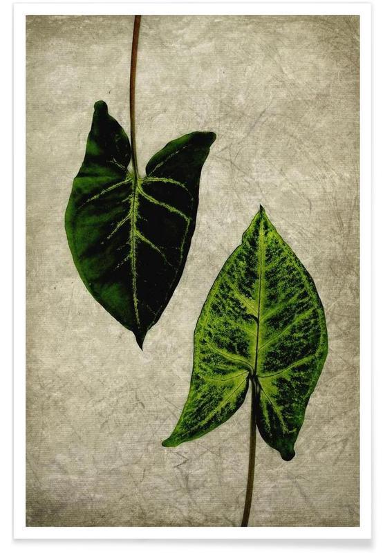 Feuilles & Plantes, Leaves 1 affiche