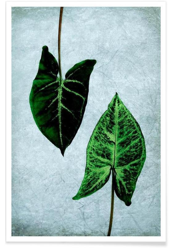 Feuilles & Plantes, Leaves 3 affiche