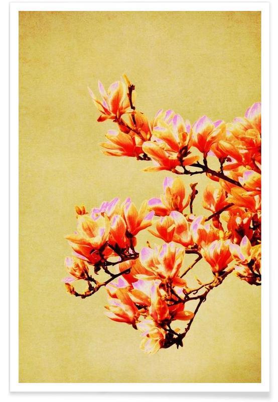 Magnolia Glow affiche