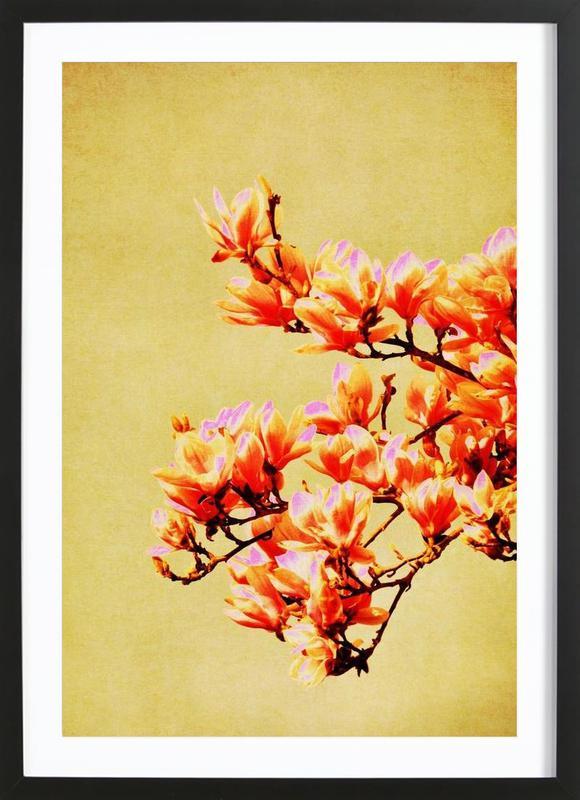 Magnolia Glow Framed Print