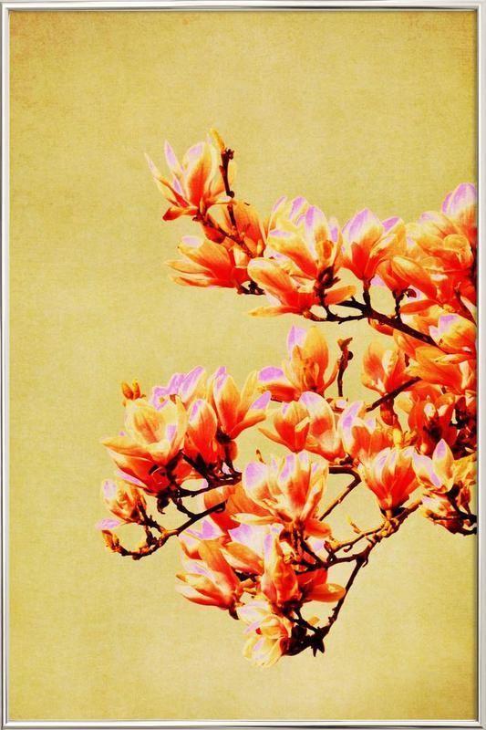 Magnolia Glow Poster in Aluminium Frame