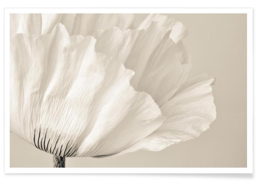 White Poppy -Poster