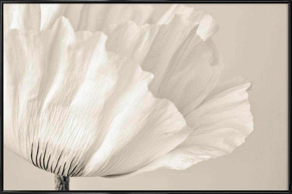 White Poppy -Bild mit Kunststoffrahmen