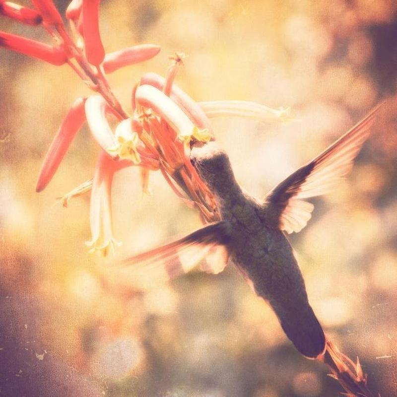 Angels flight -Leinwandbild