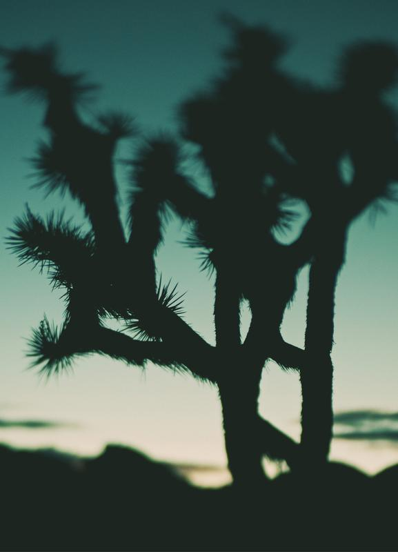 Last Night I Dreamt of the Desert No.1 Canvas Print