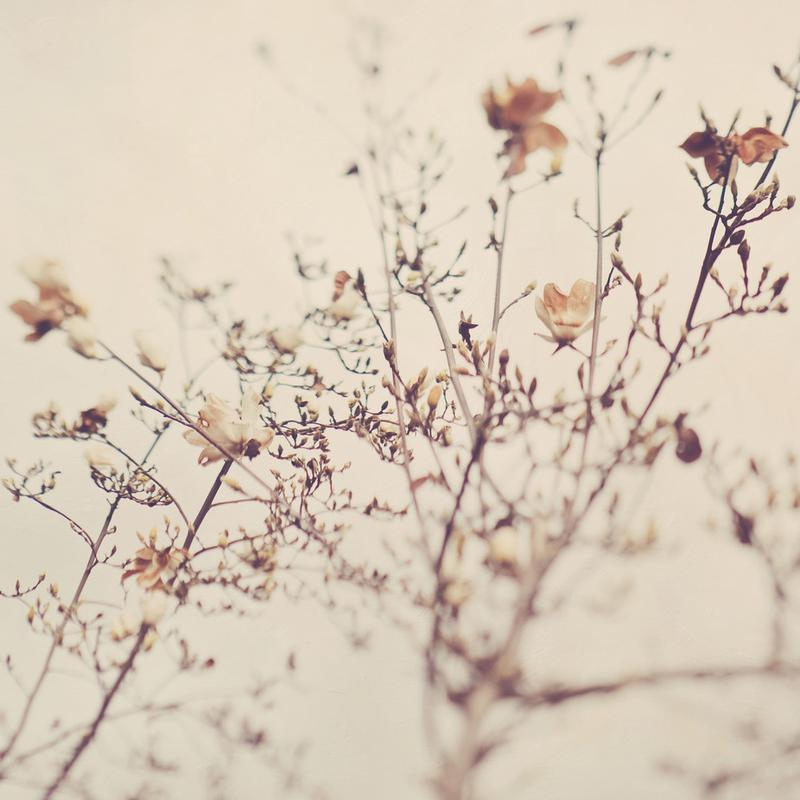 Winter No. 1 -Acrylglasbild