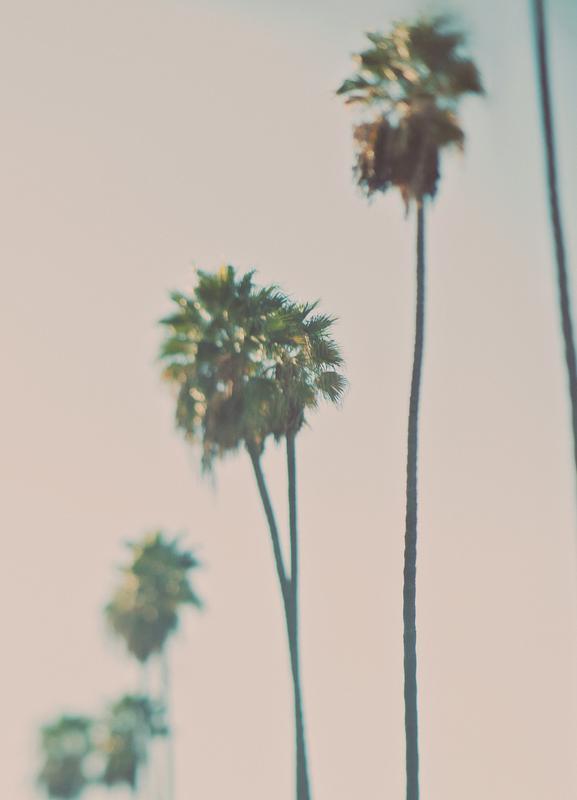 Blurry Palms Color Canvas Print