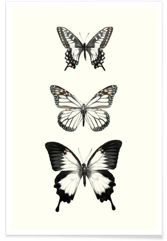 Papillons, Illustration de papillons affiche