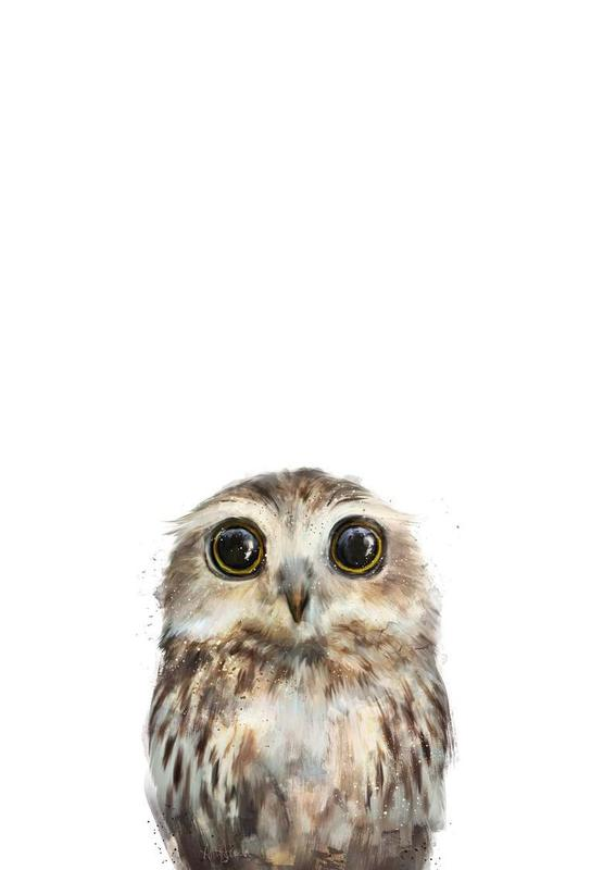 Little Owl Aluminium Print