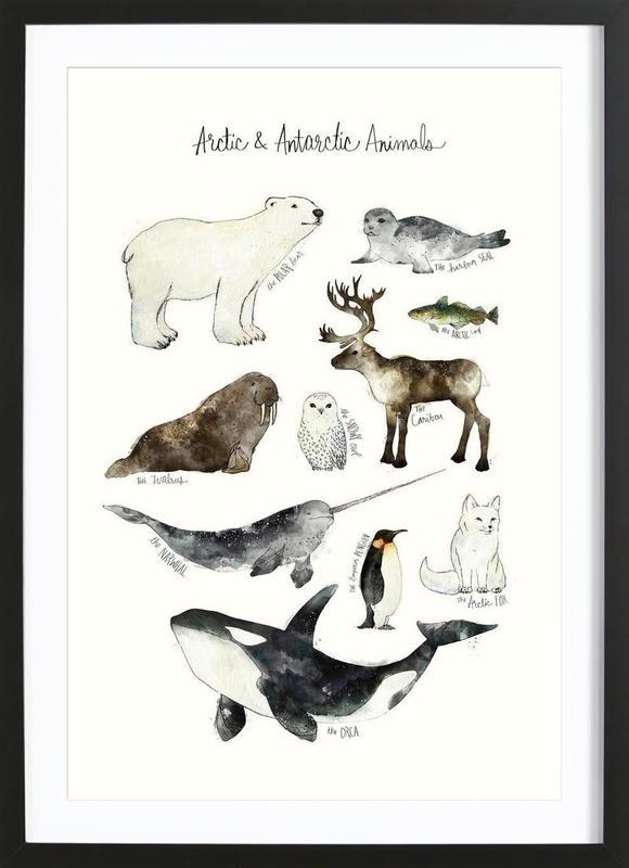 Arctic and Antarctic Animals Poster i träram