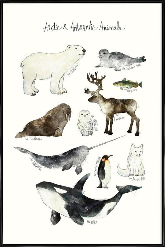 Arctic and Antarctic Animals Framed Poster