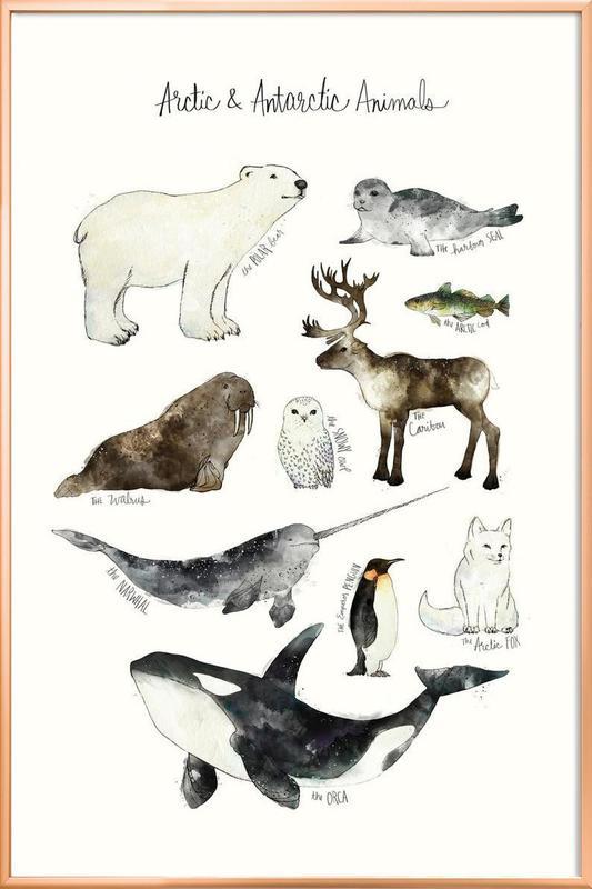 Arctic and Antarctic Animals Poster i aluminiumram