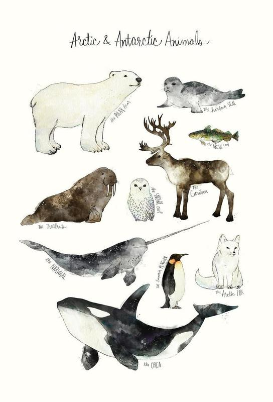 Arctic and Antarctic Animals Aluminiumtavla