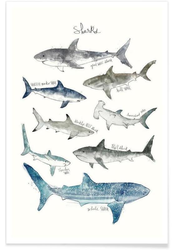 Sharks Illustration Poster