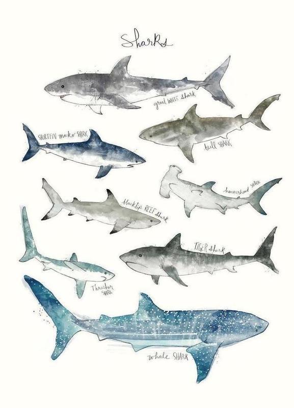 Sharks -Leinwandbild