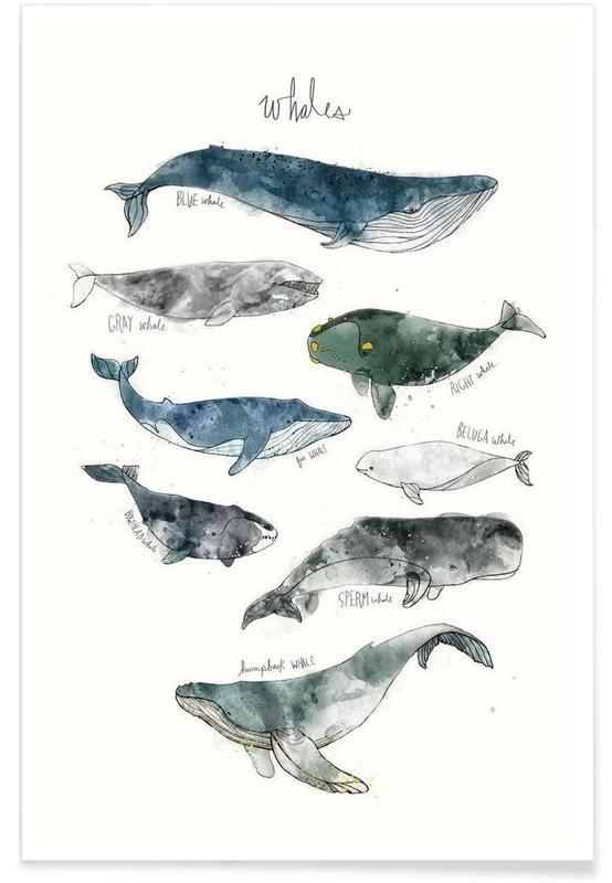 Whales Illustration Plakat