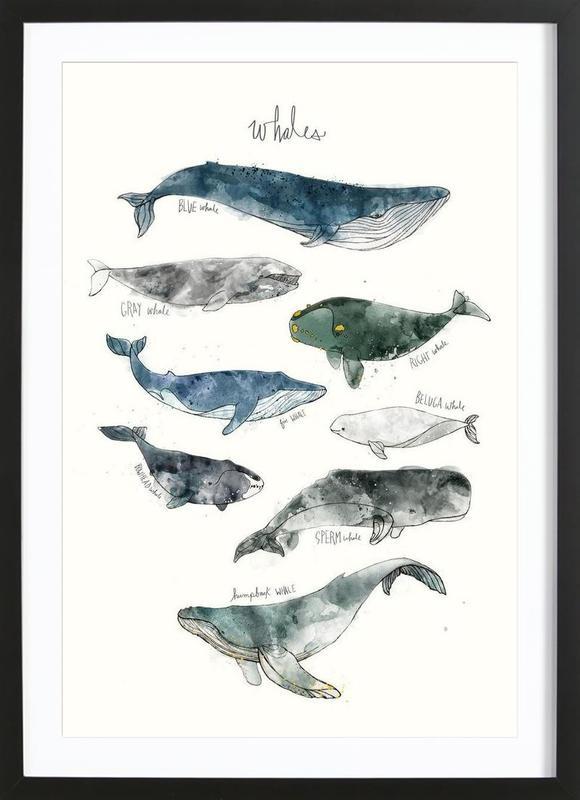 Whales affiche sous cadre en bois