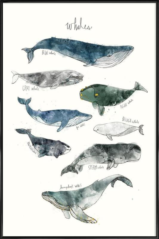 Whales Poster i standardram