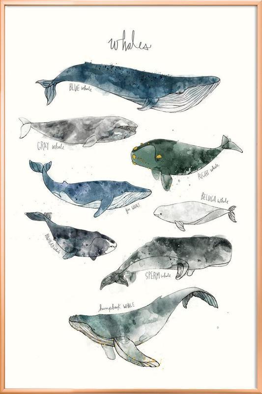 Whales affiche sous cadre en aluminium
