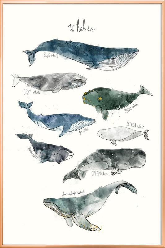 Whales Poster in Aluminium Frame