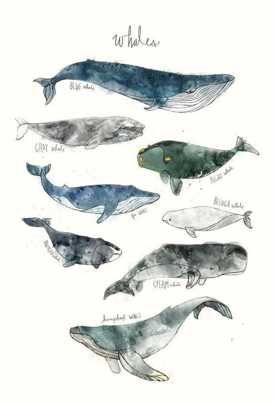 Whales Aluminium Print