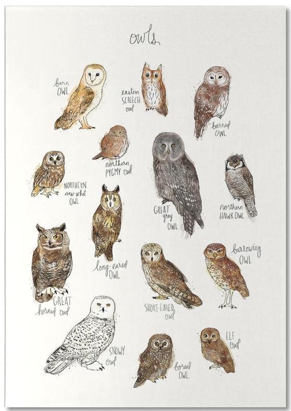 Owls Notepad