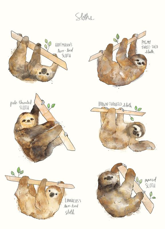 Sloths canvas doek