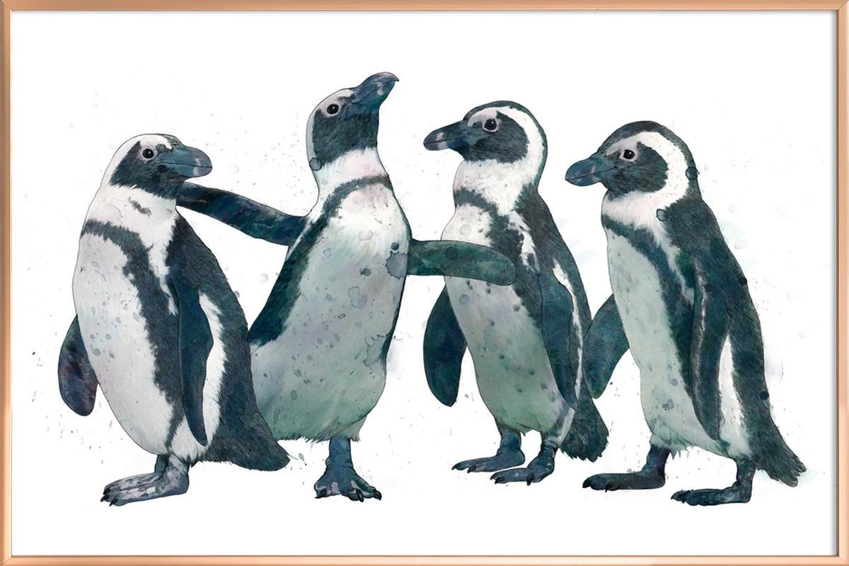 Penguins affiche sous cadre en aluminium