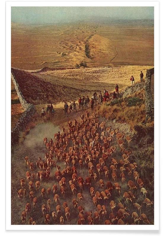 Alpacalypse Poster