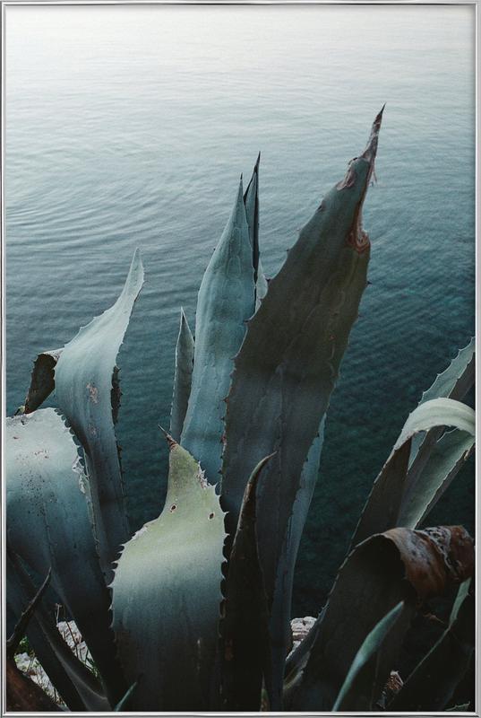 Agava -Poster im Alurahmen