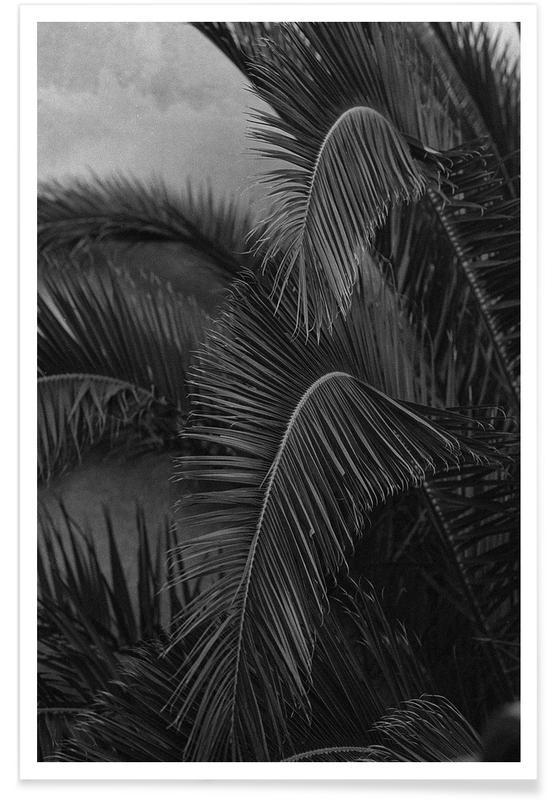 Black & White, Palms, Palm Poster