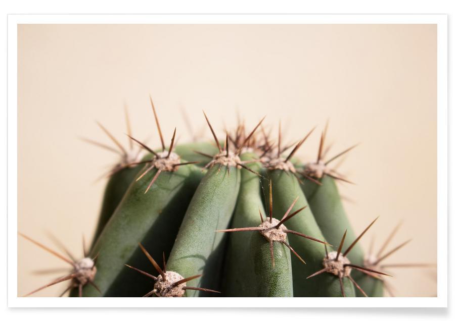 Kaktus, Cactus 02 -Poster