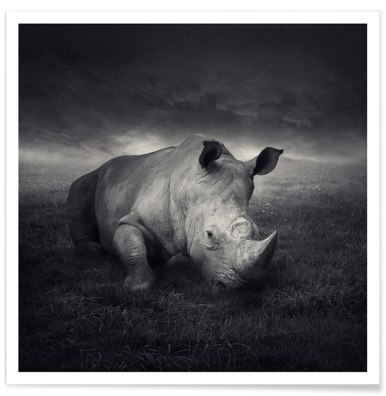 Noir & blanc, Rêve, Rhinocéros, pa 2011-19 affiche