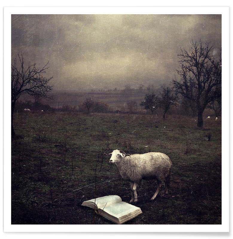 Dreamy, Sheep, pa 2009-06 Poster