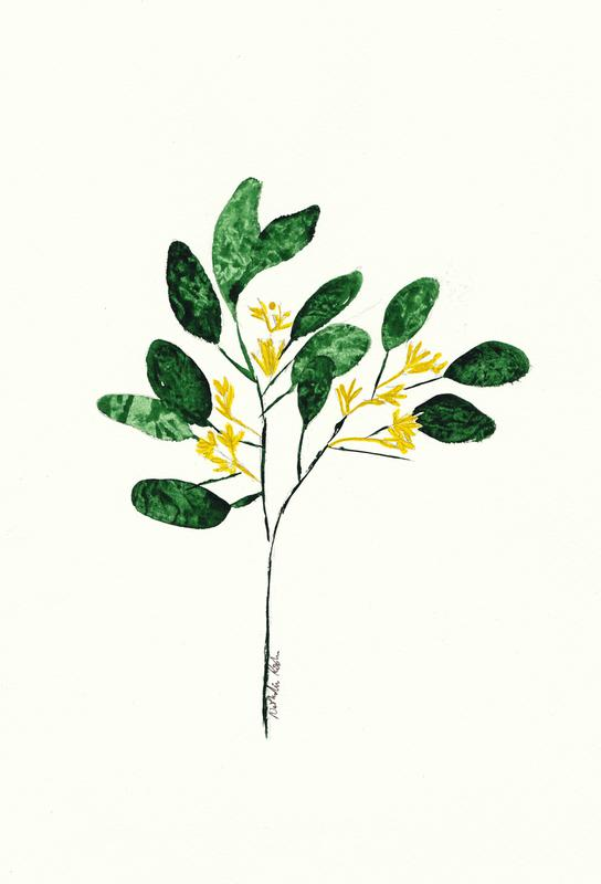 Wild Plant acrylglas print