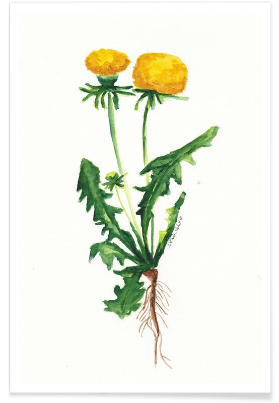 Dandelions, Löwenzahn Poster