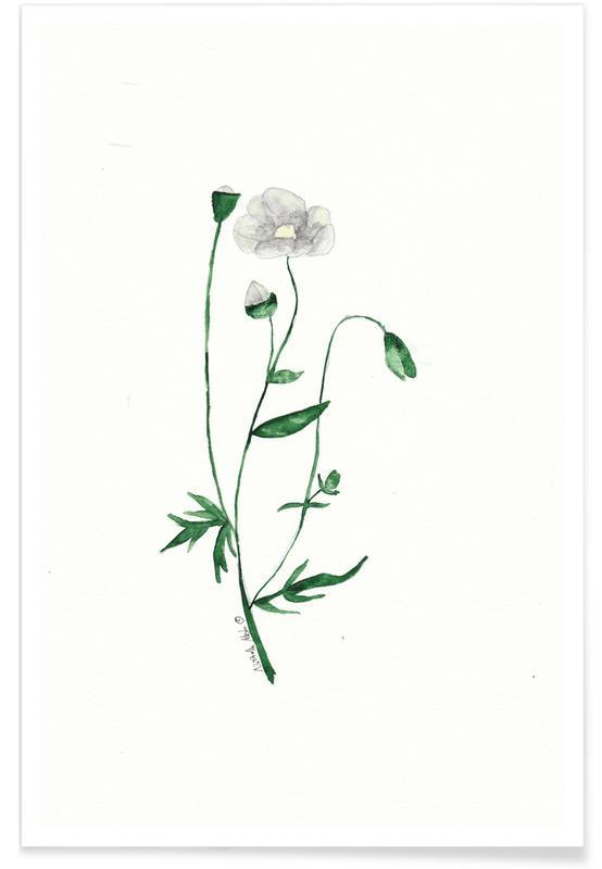 Mohnblumen, Weiße Mohnblume -Poster