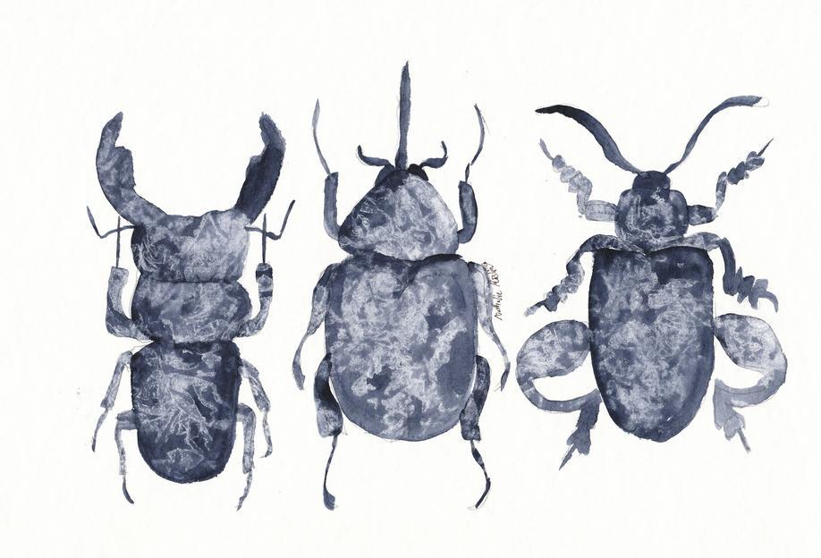 The Beetle Show Aluminium Print