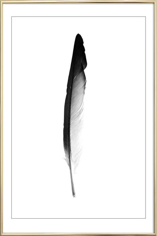 Feather -Poster im Alurahmen