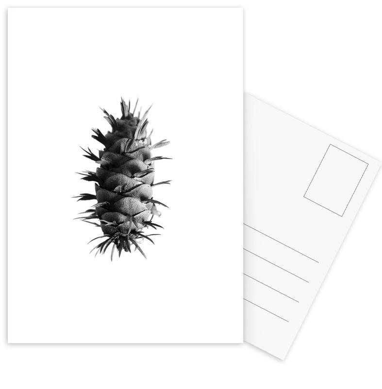 Pine Cone Postcard Set