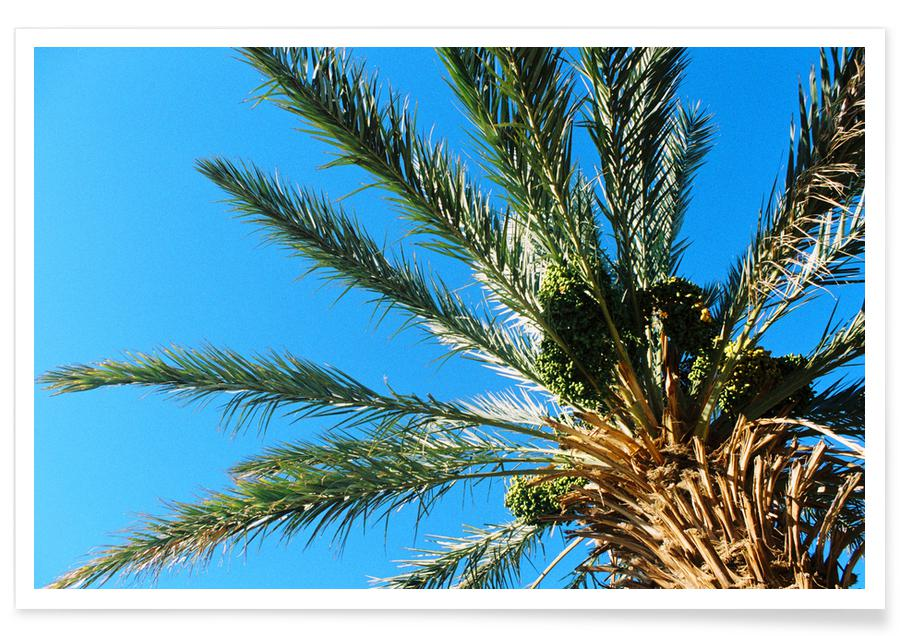 Palm Trees 2 -Poster