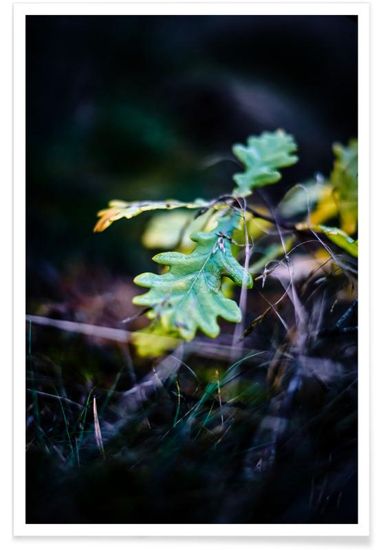 Hojas y plantas, Into the Forest III póster