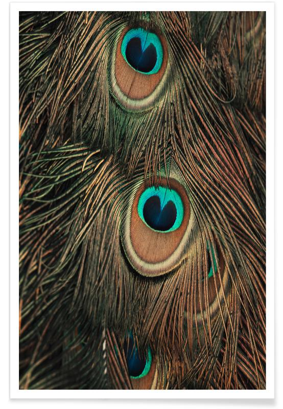 Peacock Feathers affiche